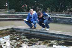 Students looking at an ornamental pond