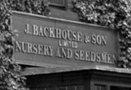 Black-and-white photograph of a sign with raised lettering (reading 'J. Backhouse & Son Limited Nursery and Seedsmen) surrounded by ivy.'