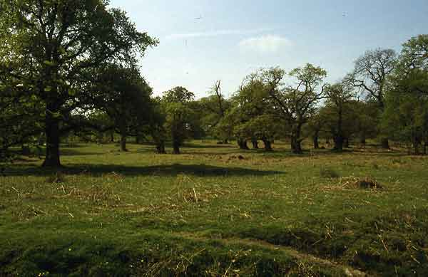 Wood pasture in Bradgate Park, Leicestershire. Copyright Paul Stamper.