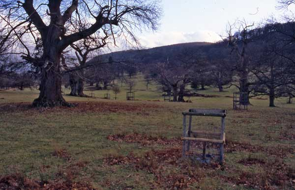 Photograph of the deer park at Moccas, Herefordshire, by Paul Stamper.