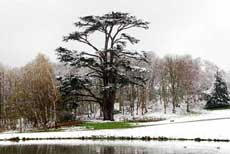 Snowy landscape with one of the surviving cedars of Lebanon planted in the 18th century, Painshill Park. Photograph copyright: Andrew Trimble.