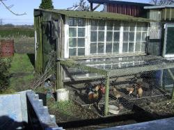 Hens and a pig were commonly kept on allotments.
