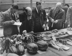 Judging at the Richmond, Swaledale vegetable show circa 1945.