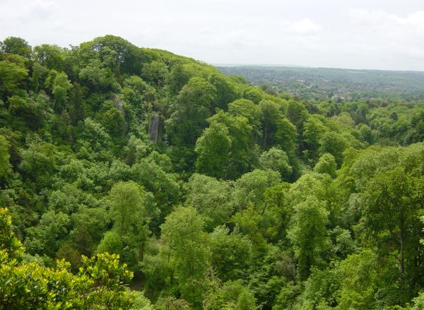 Photograph of the woodland on the Blaise Castle estate, Bristol. Photograph by Alan Barber.
