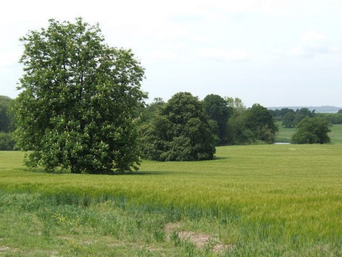 Pgds 20140722 140024 Parkland At Berrington Hall   Geograph Org Uk   440390