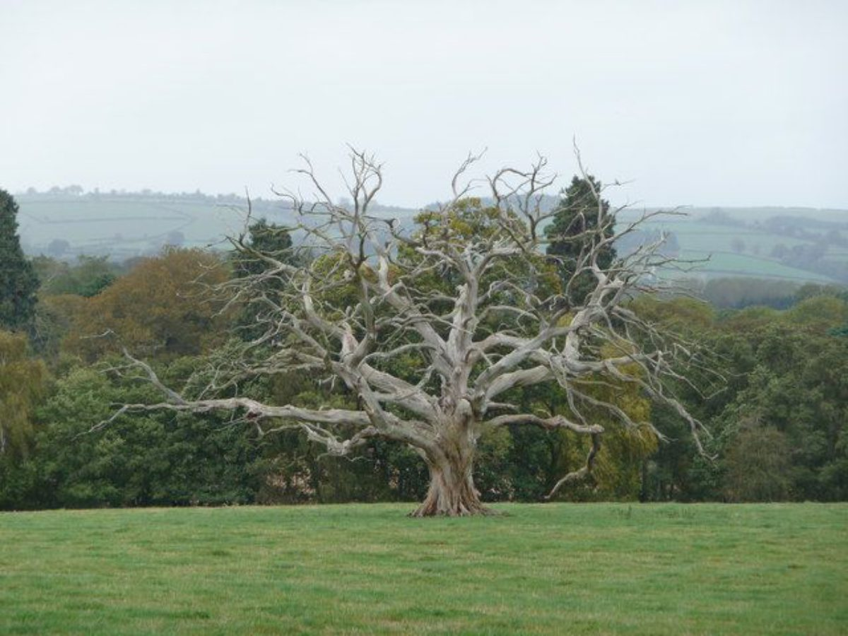 Pgds 20140915 152750 Naked Tree In Oakly Park Pastureland   Geograph Org Uk   1550065