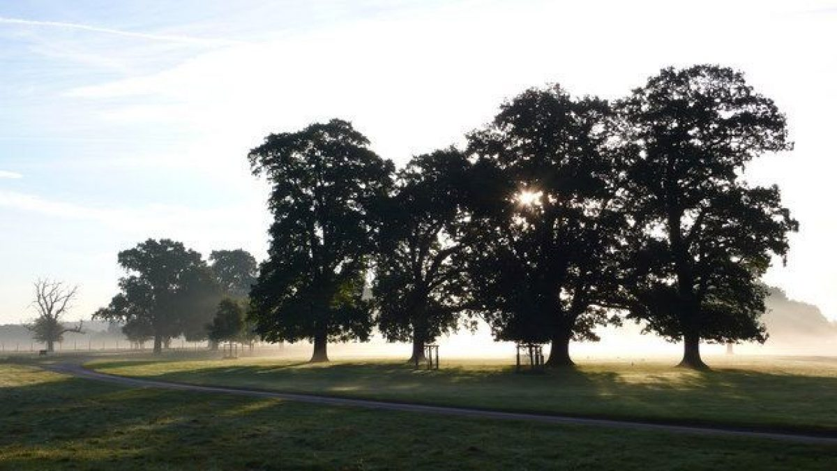 Pgds 20140916 134959 Early Morning Mist In Packington Park   Geograph Org Uk   582664