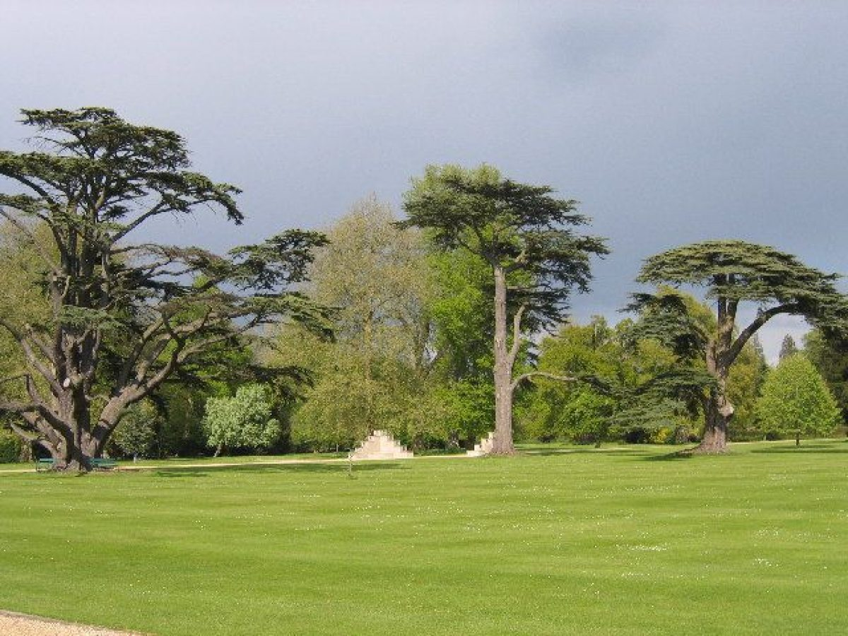 Pgds 20140930 150552 Cedars In The Grounds Of Wilton House Wilton Wiltshire   Geograph Org Uk   88526