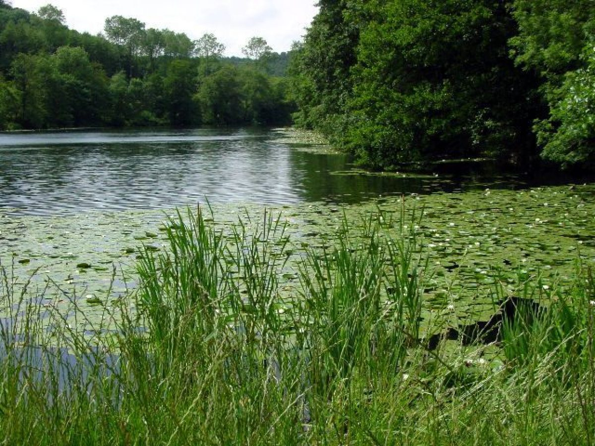 Pgds 20141001 144909 Lake At Woodchester Park   Geograph Org Uk   5